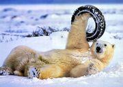 Ремонт порезов ,  удаление шишек колеса.