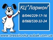 Дрессировка собак с заботой и любовью (Киев)
