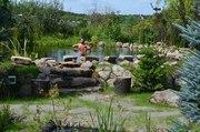 Продам водные растения для прудов