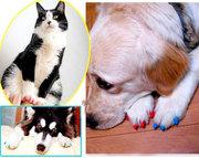 Антицарапки,  накладки на когти для животных,  защита коготков,  мягкие н