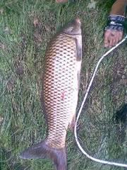 частная рыбалка киев
