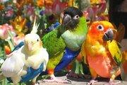 Защита птиц от самоощипывания,  защита владельцев от птичьего помёт