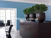 Индивидуальный подбор растений для вашего дома
