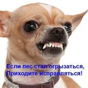 Дрессировка собак с проблемным поведением