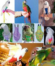 Одежда против ощипа у попугаев. Защитные костюмы от самоощипа у попуга