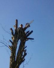 Спилить дерево Киев Удаление деревьев Корчевание пней