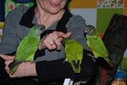 Говорящие ручные средние попугаи - лучший выбор для детей