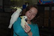 Ручной попугай Какаду с шикарным хохолком - птенцы выкормыши