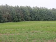 35 гектара участок земля сад теплицы хозяйство урожай хозяин