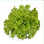 Cемена салата KS 129 (Китано)