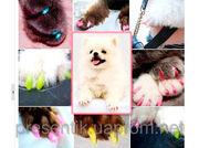 Антицарапки /накладки на ногти для животных