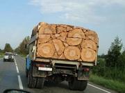 Дрова дуб,  акація,  береза,  сосна,  тополя з доставкою