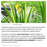 Прибрежные растения ,  Нимфеи