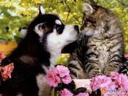 Ветеринарная помощь надому
