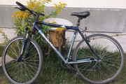 Велосипед BERGAMONT