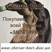 Продать волосы Киев,  скупка волос Одесса,  купим волосы Днепр,  покупаем