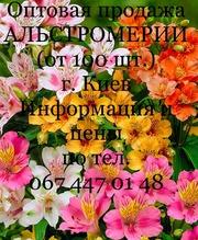 Альстромерия,  опт. от 100 шт.,  г. Киев
