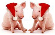 Ручные мини пиги в аренду к Новому году,  Петух свиньи