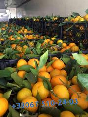 Новогодние цитрусы,  фрукты в Киеве
