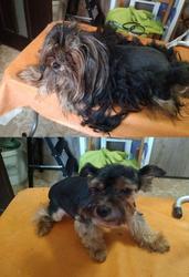 Стрижка,  тримминг,  роллинг собак
