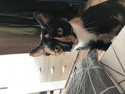 Котёнок ищет семью