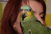 Говорящие попугаи амазоны