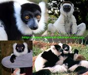 Приматы различные виды