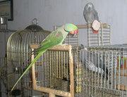 Попугаи . Клетки и вольеры для попугаев